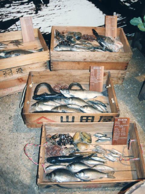 水辺のくらしと琵琶湖の自然コーナー