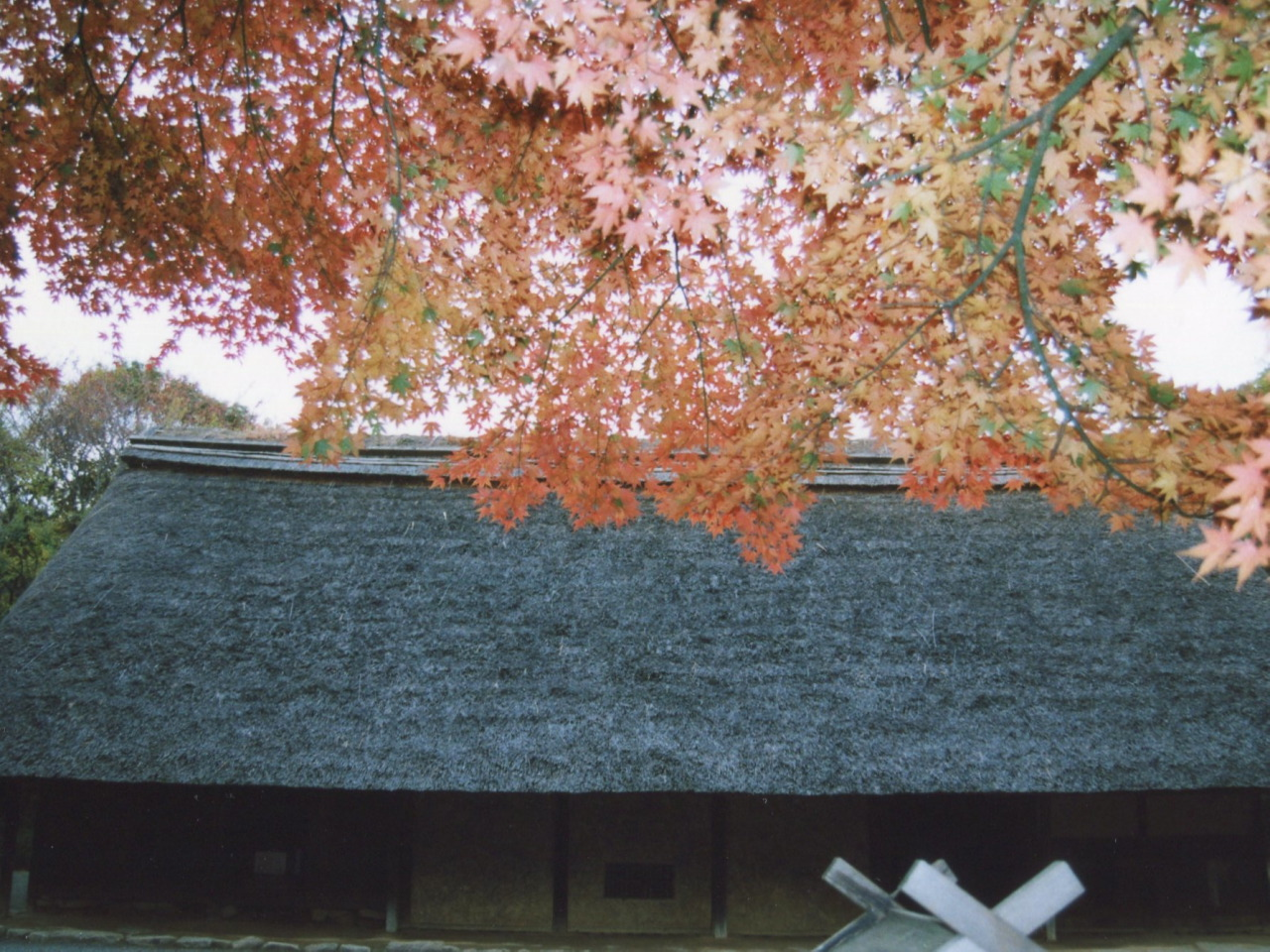 丘陵地帯に古民家が点在する「川崎市立日本民家園」。秋には木々の色づきが美しい
