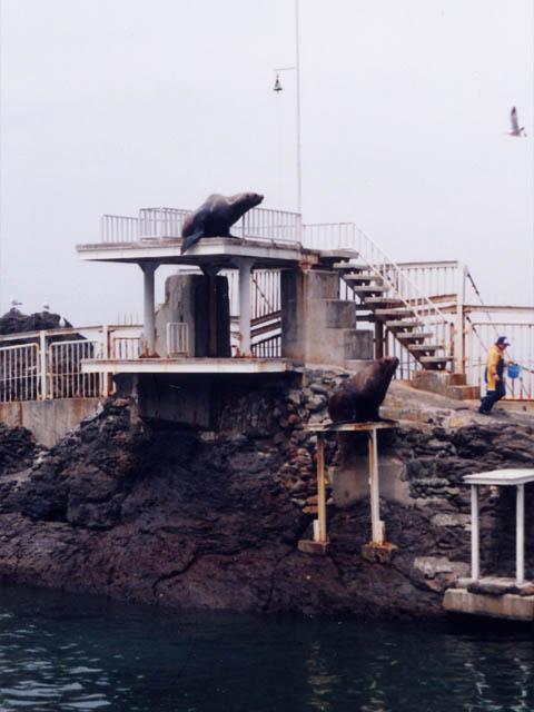おたる水族館(北海道小樽市)