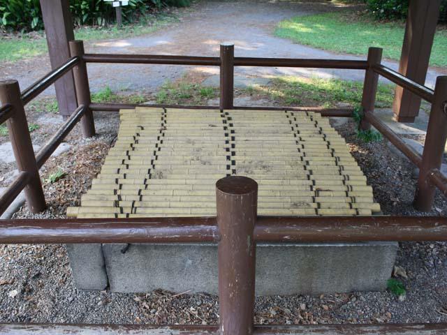 小石川御薬園の井戸跡