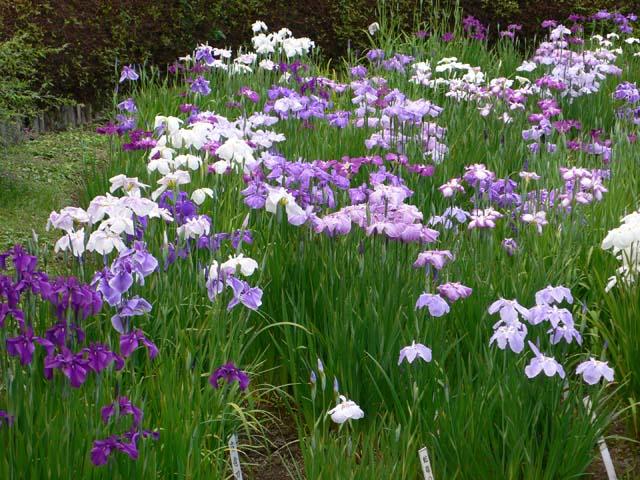 小石川植物園(日本庭園)