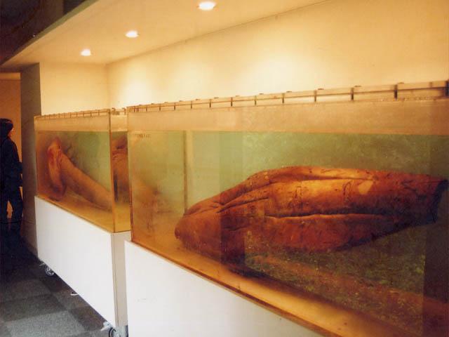大洗磯前神社/大洗海洋博物館