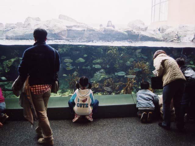 「海藻の海」