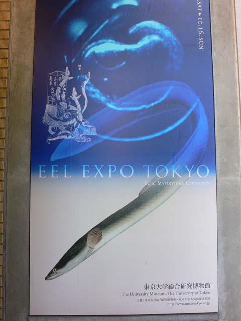 東京大学総合研究博物館「鰻博覧会」