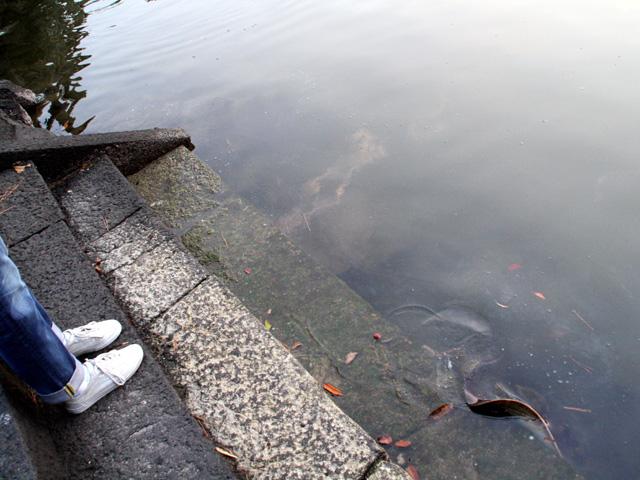 明神池(右端の水辺にエイのヒレが見える)