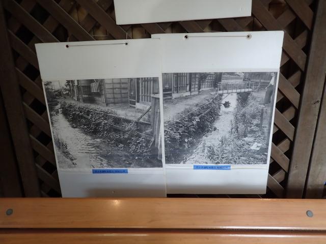 河骨川の写真:渋谷区ふれあい植物センター