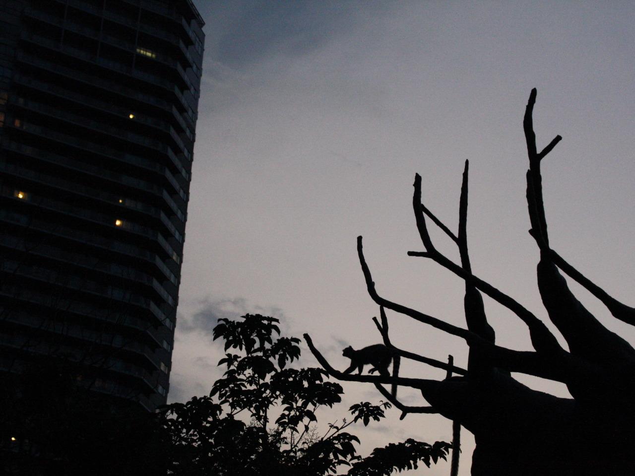 真夏の夜の動物園:上野動物園