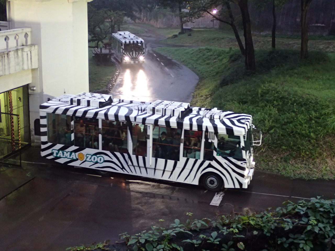 多摩動物公園・ライオンバス