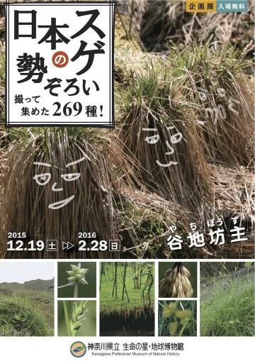 神奈川県立生命の星・地球博物館「日本のスゲ勢ぞろい」展