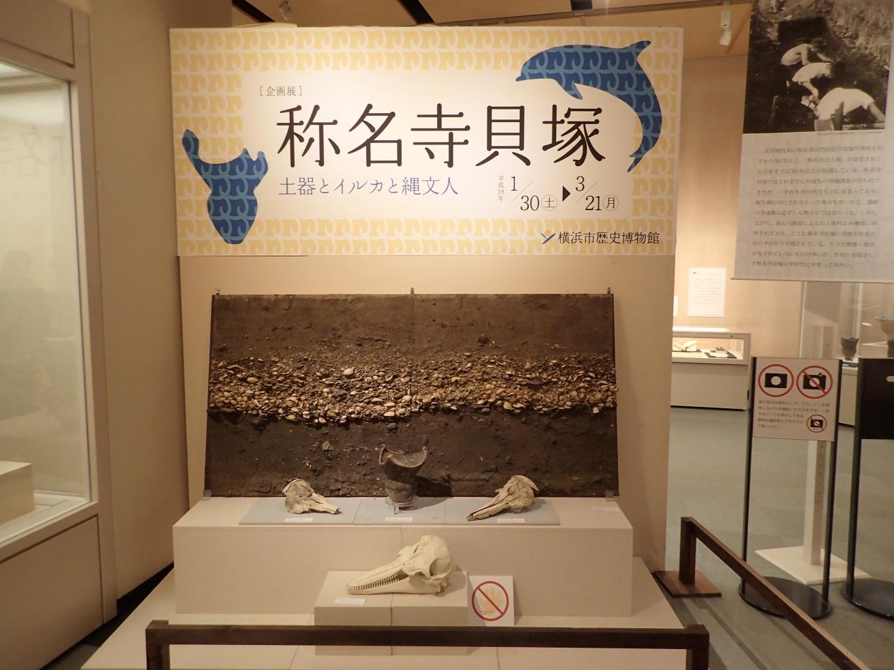 横浜市歴史博物館・称名寺貝塚展