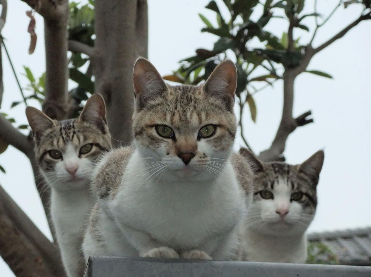 ネコ(イメージ)