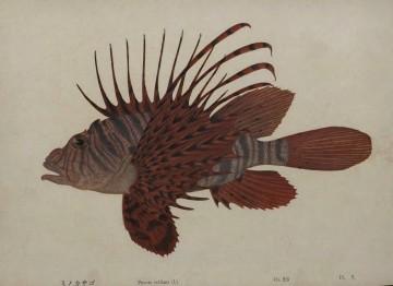『日本魚介図譜』(国立国会図書館蔵)