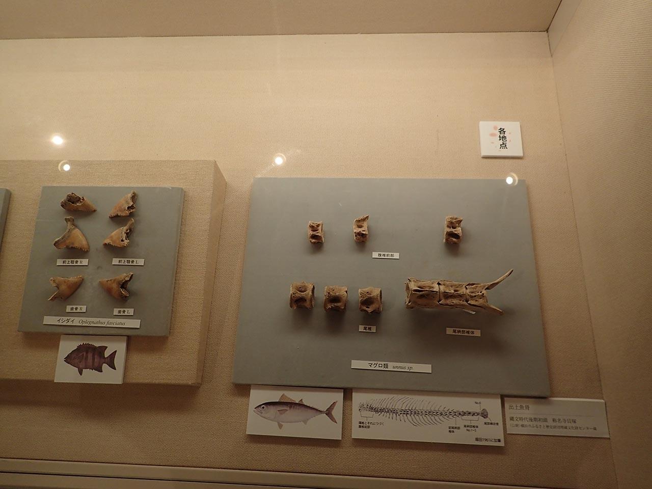 横浜市歴史博物館「称名寺貝塚 土器とイルカと縄文人」展