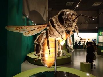 国立科学博物館・特別展「昆虫」
