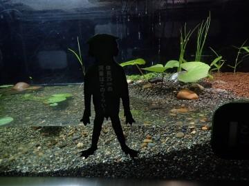 葛西臨海水族園・淡水生物館