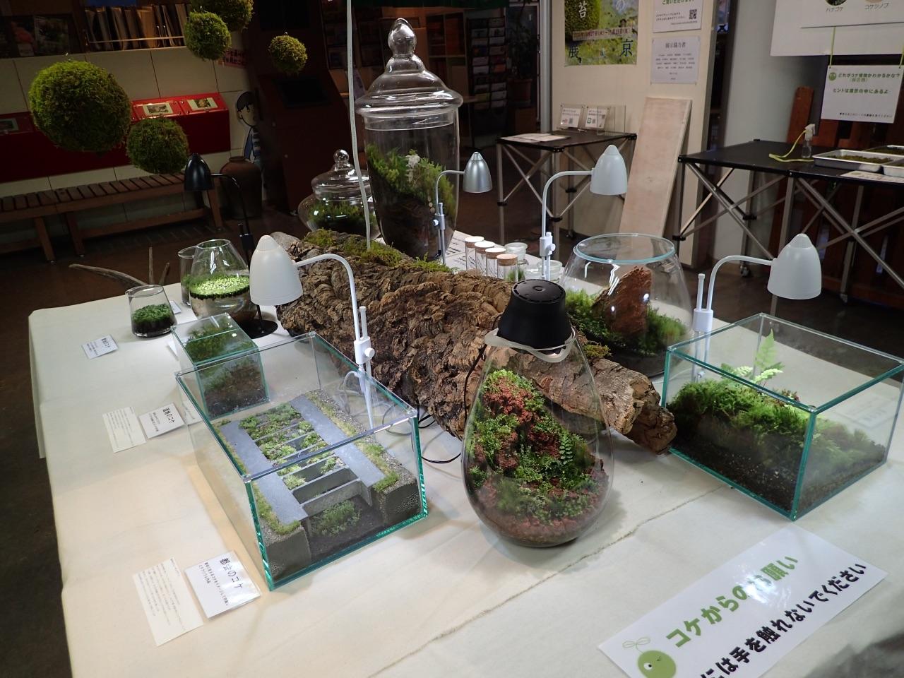 渋谷区ふれあい植物センター「あなたの傍にそっと苔」展
