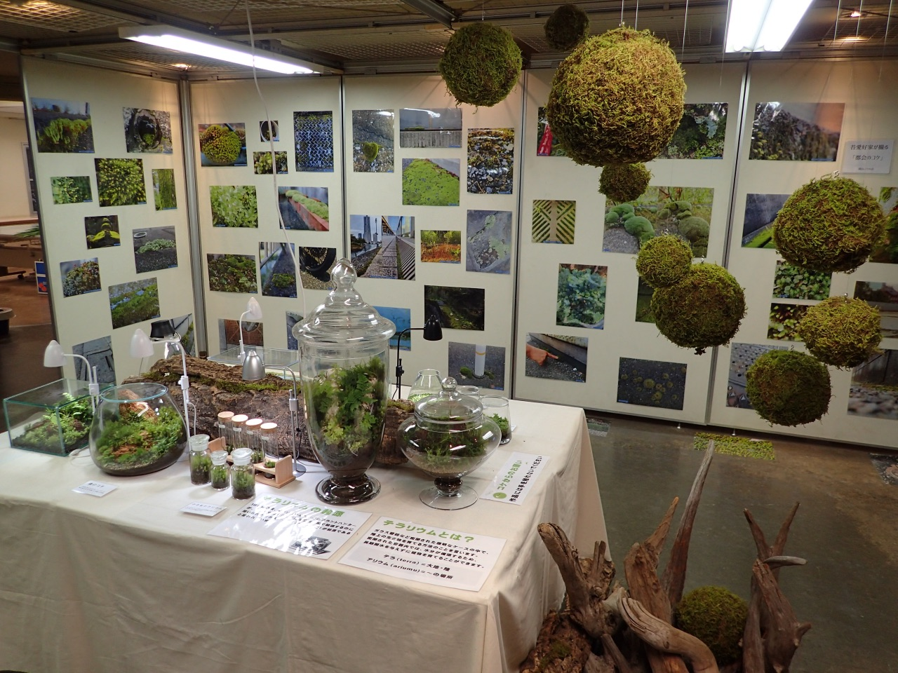 渋谷区ふれあい植物センター「あなたの傍にそっと苔」